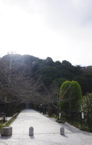 曲田山(散歩した裏山)=堀内優美さん撮影
