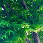 祖母の家の紅葉=堀内優美さん撮影