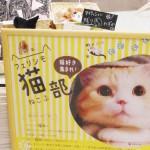 猫部ポスター=撮影・堀内優美