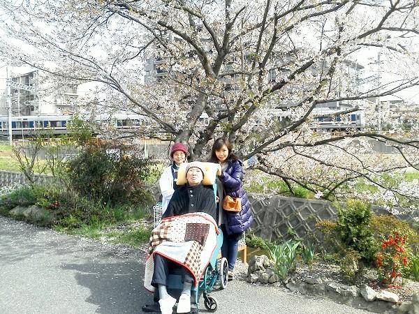 ショートステイなどを利用しながら自宅介護。桜の季節、家族そろって近所の桜の樹の前で=2012年4月15日、撮影・橋本正人