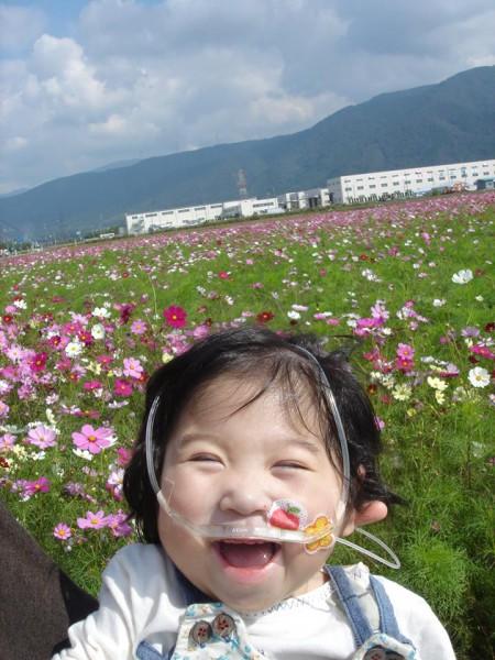 コスモス畑を背景に笑うあ~ちゃん  2歳のお誕生日 写真提供:林智子さん