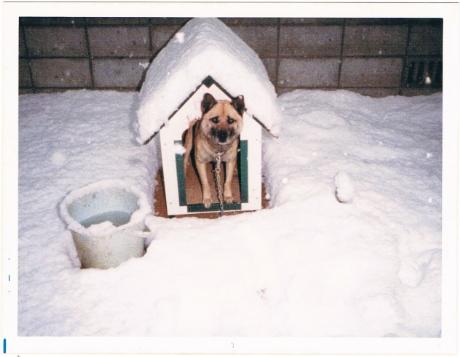 当時の岡山市自宅庭にて。大雪が降った日のケン。5歳。=撮影・岩村美佳