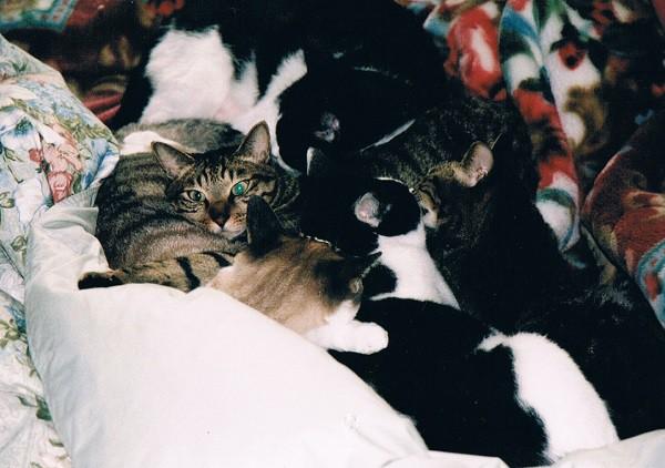 しゃら・ぶち太郎・しゃら次郎・てんてん三郎・じゅうべいの猫団子=撮影・岩村美佳