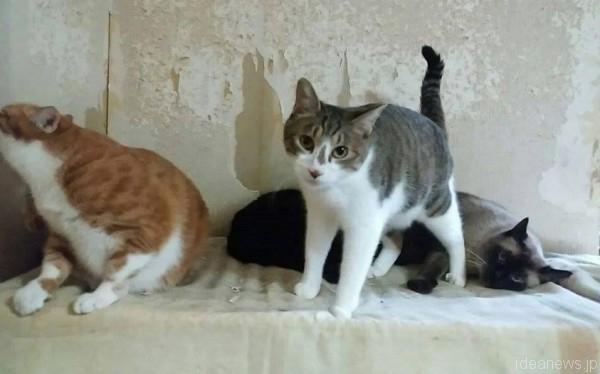 赤間さんのシェルターにいる猫は、毛並みも目力もバッチリ=撮影・松中みどり