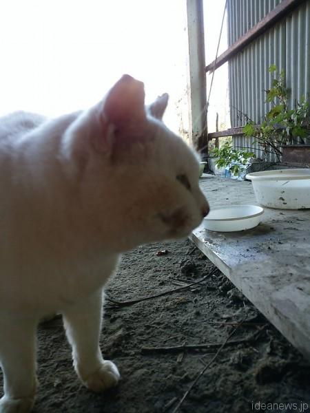 福島第一原発20キロ圏内に生きる猫「プーちゃん」=撮影:松中みどり