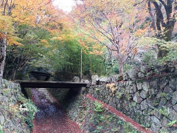 JR武田尾駅とマルキ旅館の間の道沿いの風景=2015年11月13日、撮影・橋本正人