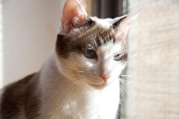 我が家のビジュアル担当ぽんず。大きい青い目がとても綺麗=撮影・岩村美佳