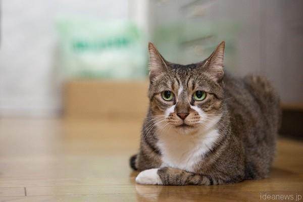 他の猫がいない場所でくつろぐすもも。でも、耳が警戒中=撮影・岩村美佳