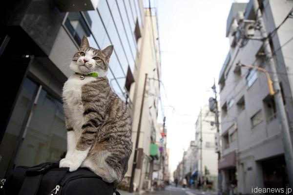 私の機材バッグの上で街を見渡すトラちゃん。生後10カ月=撮影・岩村美佳