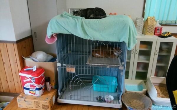 赤間さんのシェルターにいる保護猫さん=撮影・松中みどり