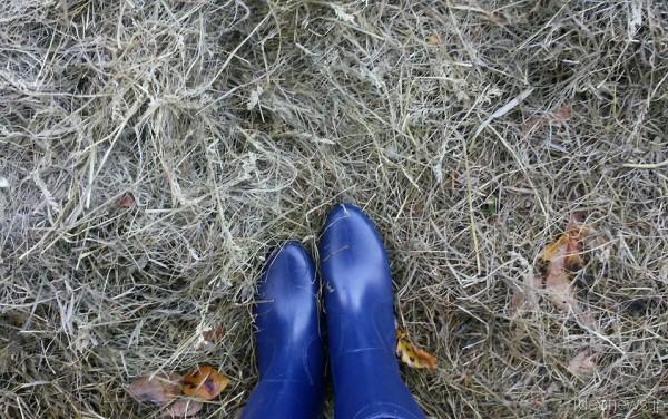 福島に行くときにはこれと決めているマイ長靴=撮影・松中みどり