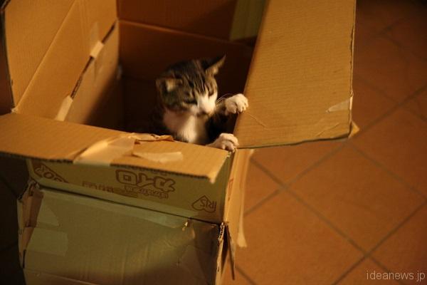 小学生たちが作ったダンボールの中の子猫。入れてもすぐに飛び出してしまう=撮影・岩村美佳
