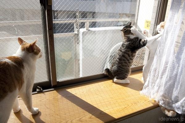 ゆず吉と遊ぶ時間が一番多かった=撮影・岩村美佳