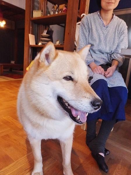 北海道犬の矢吹レオくん(5才)=撮影・きたあつこ