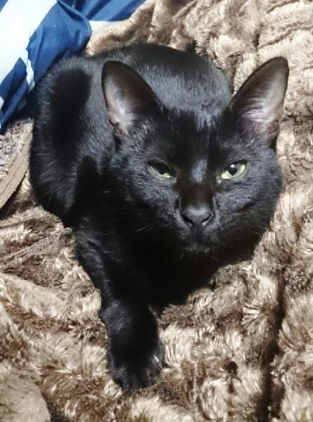 行方不明になっている黒猫「りゅた」君=写真提供・飼い主さん