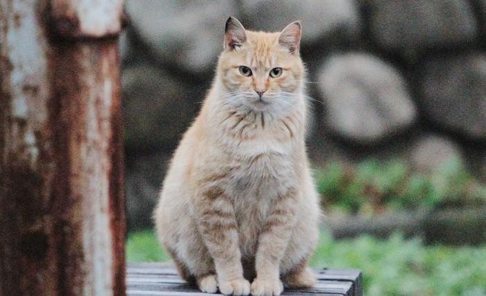 「りゅた君」探しで出かけた先の公園で見かけた地域猫=撮影:アイデアニュース・橋本正人