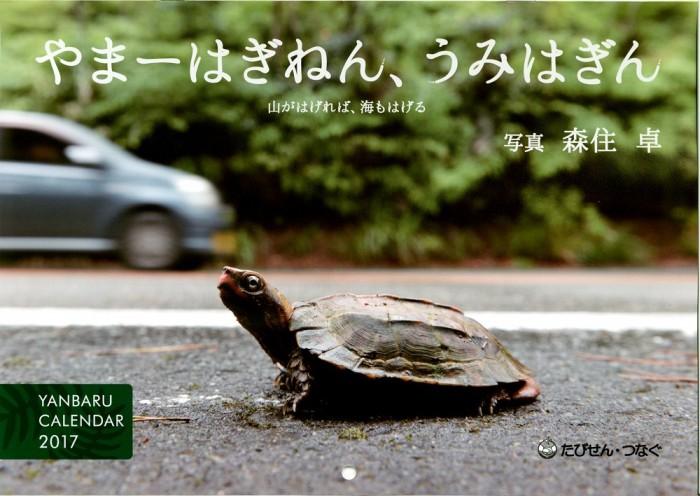 やんばるカレンダー2017 表紙写真:雨上がり、道路に出てきたリュウキュウヤマガメ。国の天然記念物。