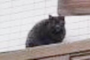 宝塚市売布4丁目で目撃された黒猫。詳細は未確認です=2016年12月20日撮影、12月22日提供