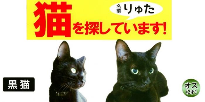 黒猫「りゅた君」の情報提供を呼びかけるチラシ
