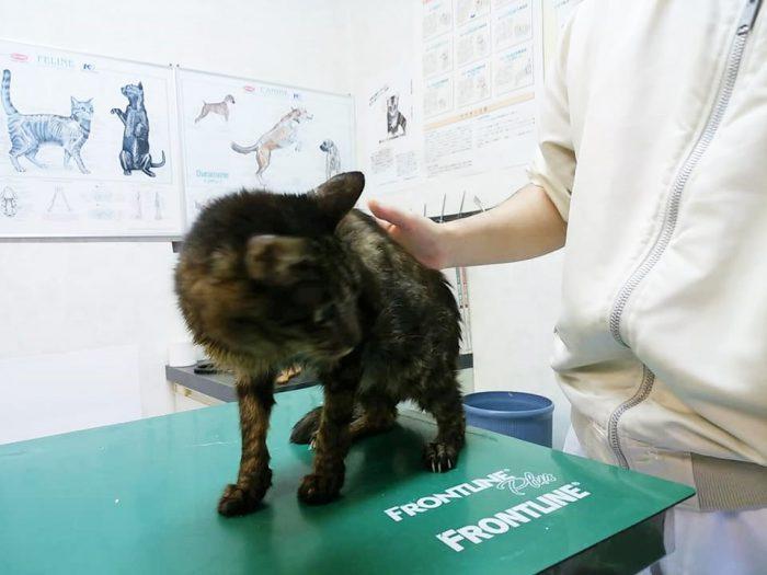 病院の中には保護された猫がたくさんいました=撮影・松中みどり
