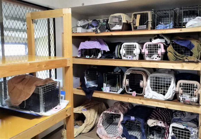 のらねこさんの手術室でリターン待機中の猫たち=撮影・松中みどり